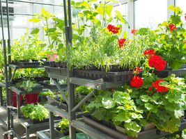Botany Plant Sale Saturday, May 12, 9 am - 1 pm