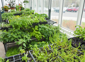 Botany Plant Sale Saturday, May 18